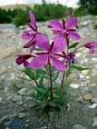 флора Кенозерского национального парка